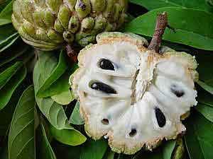 Fruit Martine 30 septembre-bravo Ajonc Fpomcannecoupe